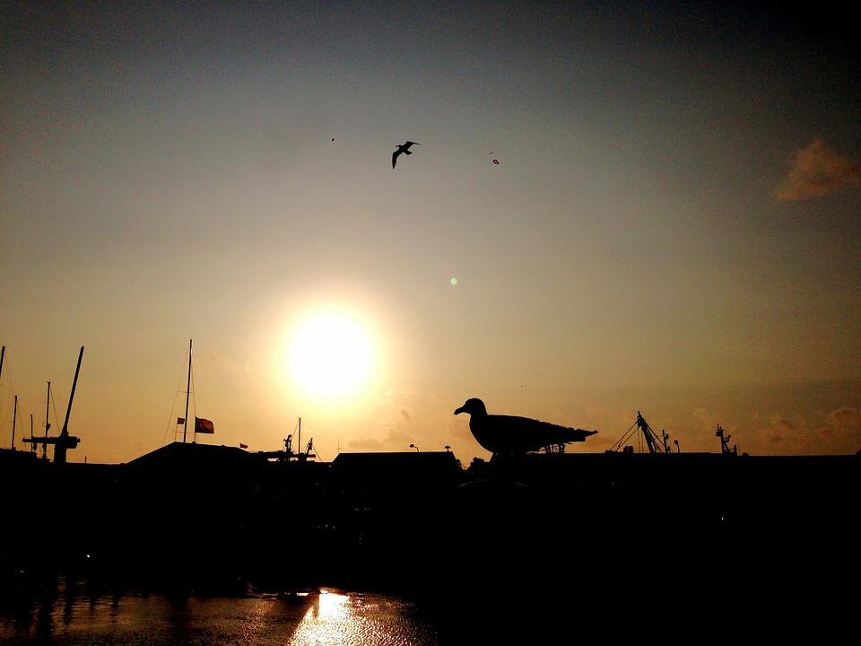 Seagull, Back Light, Shadow, Sea, Dramatic Sky