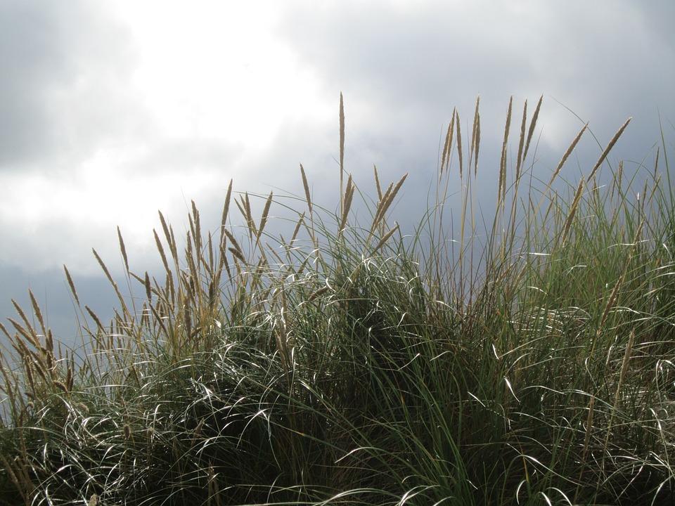 Back Light, Grass, Grasses, Sky