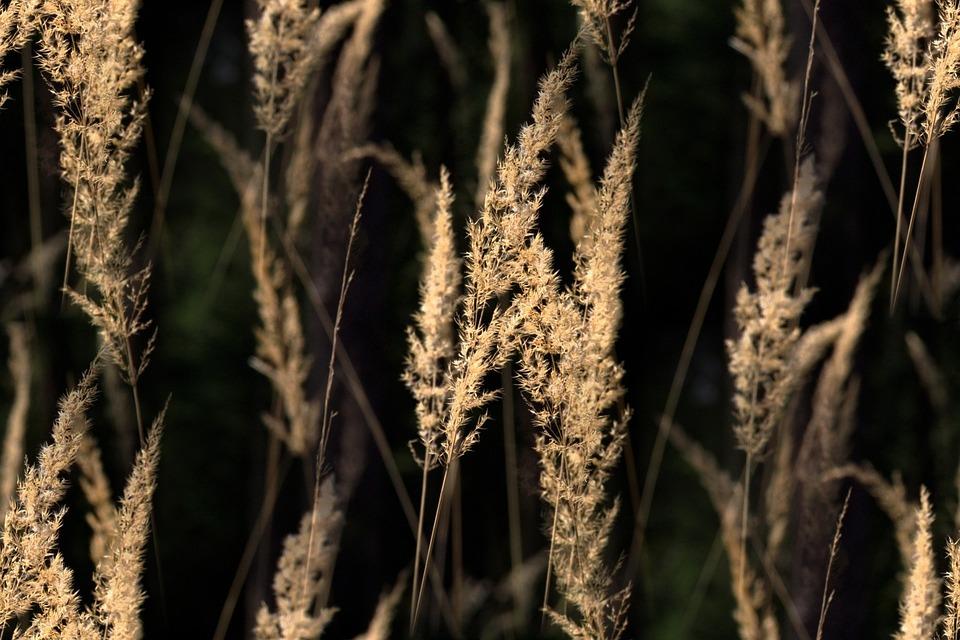 Grasses, Back Light, Blades Of Grass, Meadow, Halme