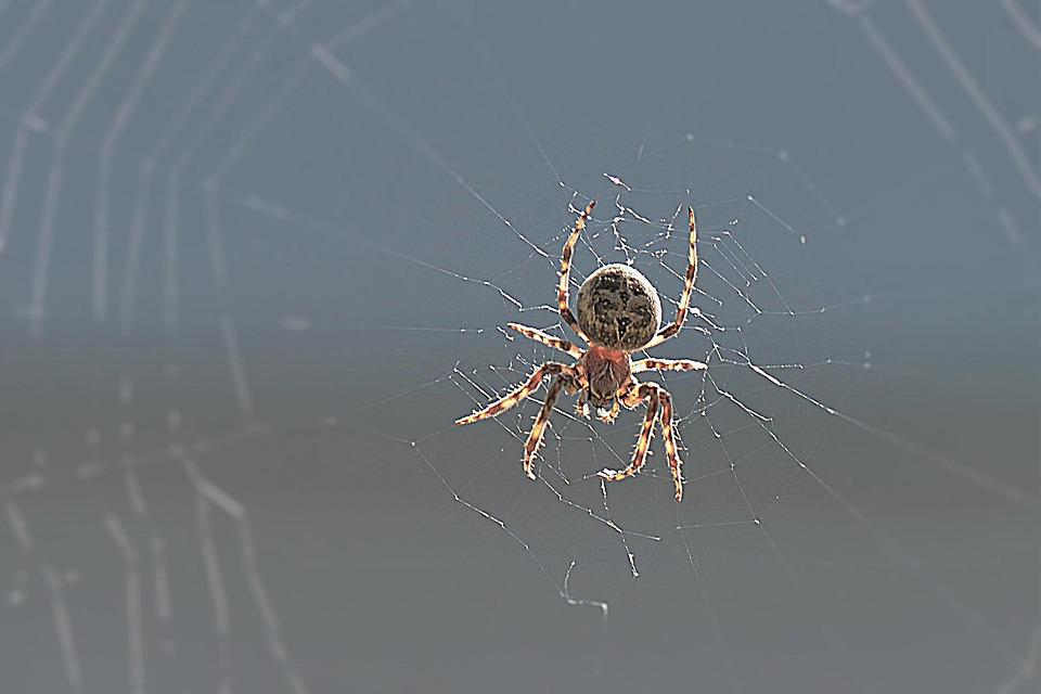 Spider, Back Light, Close, Network, Insect