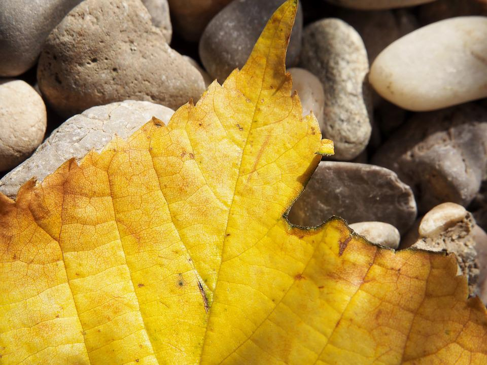 Leaf, Autumn, Yellow, Background, Greeting Card, Mood