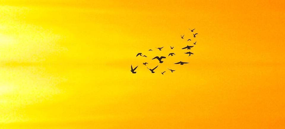 Birds, Gathering, Flying, Background, Art, Wallpaper
