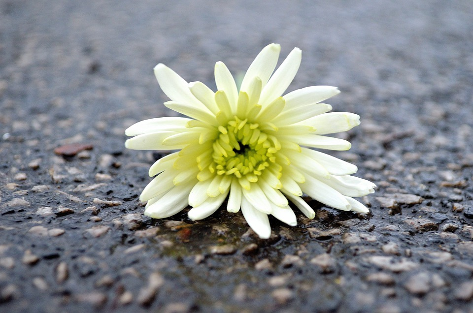 Flower, Macro, Background, Roads, Decoration