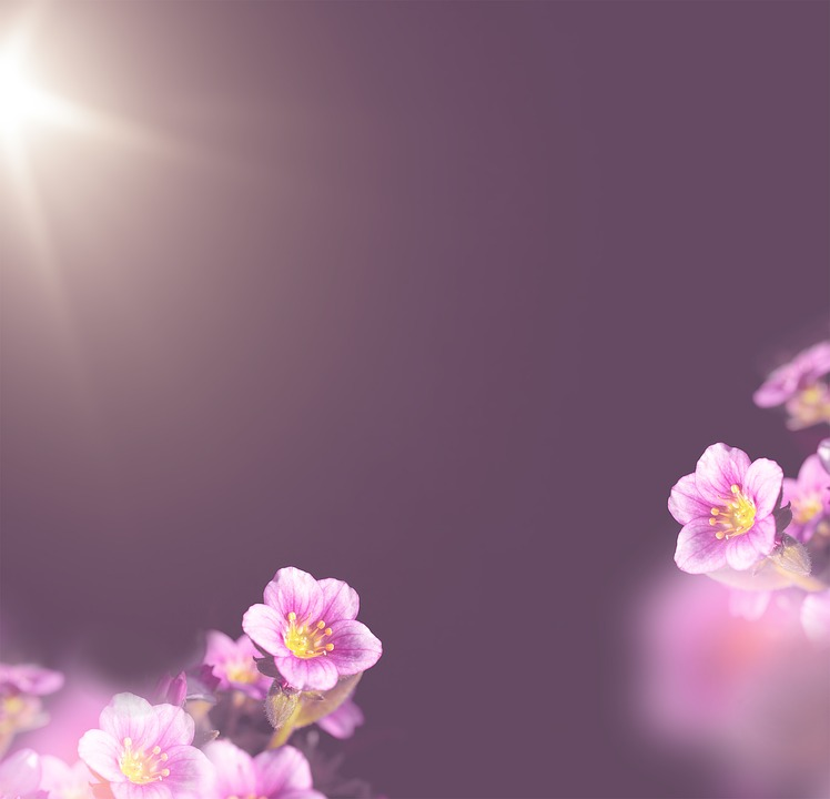 Background, Flowers Background, Flowers, Pink