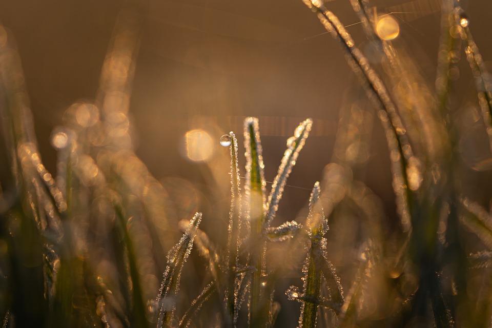 Nature, Grass, Background, Wallpaper, Macro, Frozen