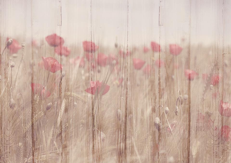 Background Image, Flowers, Klatschmohn, Wood, Structure