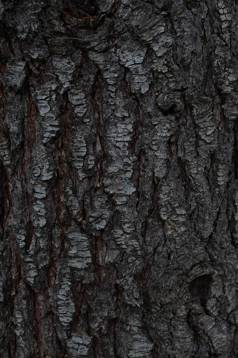 Pine, Tree, Background, Background Is, Desktop, Bark