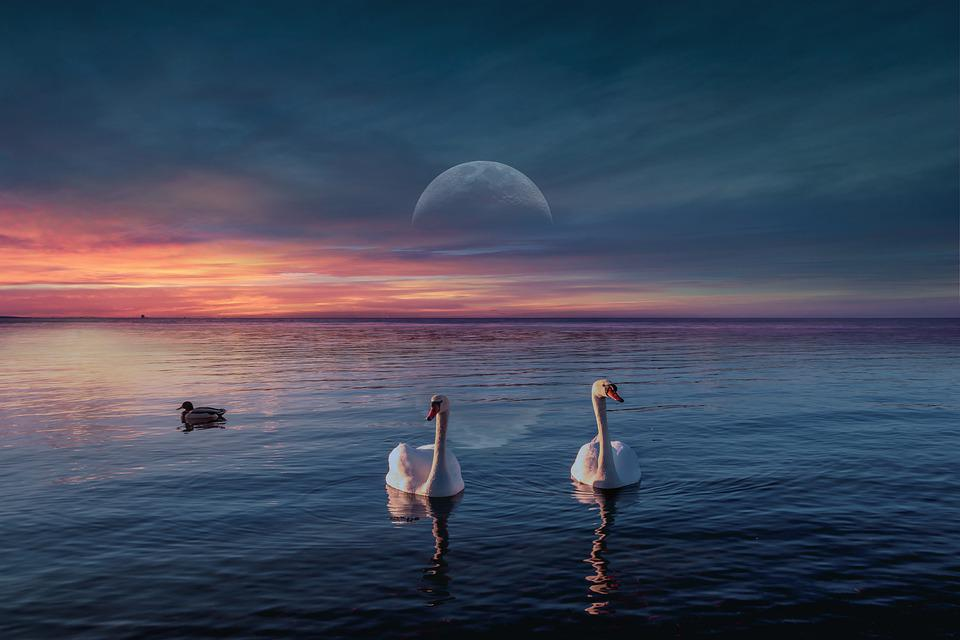 Background, Sunset, Lake, Swans, Darling, Birds, Clouds