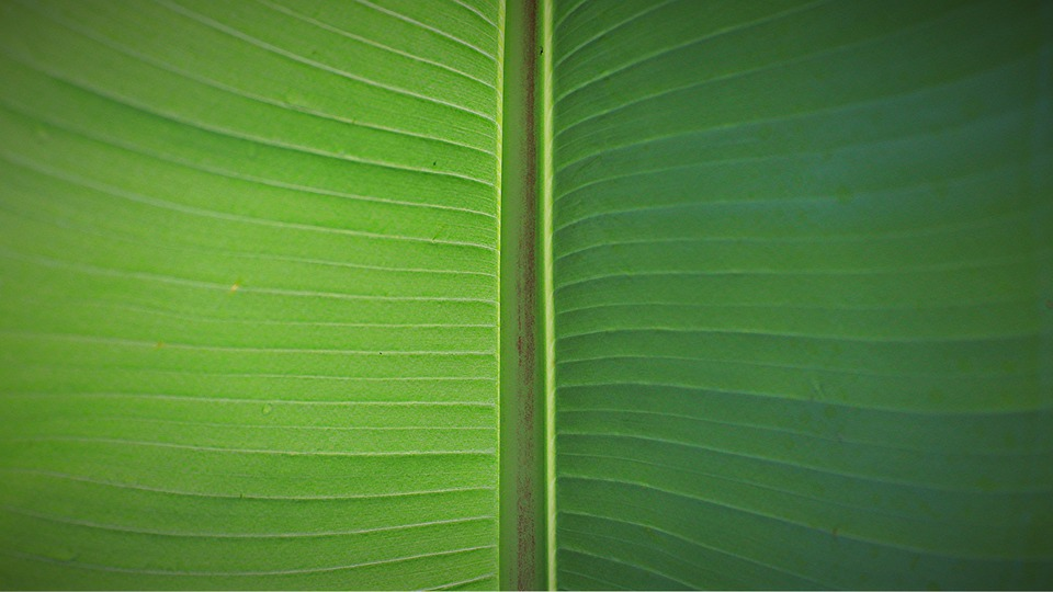 Leaf, Palm, James, Leaf Green, Background, Banner