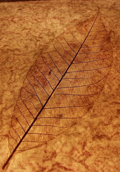 Leaf, Leaf Skeleton, Leaf Veins, Brown, Background