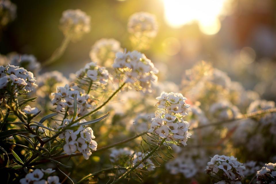 Flowers, Greens, Nature, Plants, Macro, Background