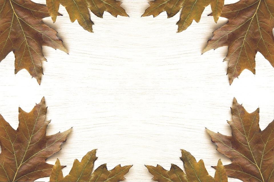 Frame, Autumn, Leaf, Fall, Orange, Pattern, Background
