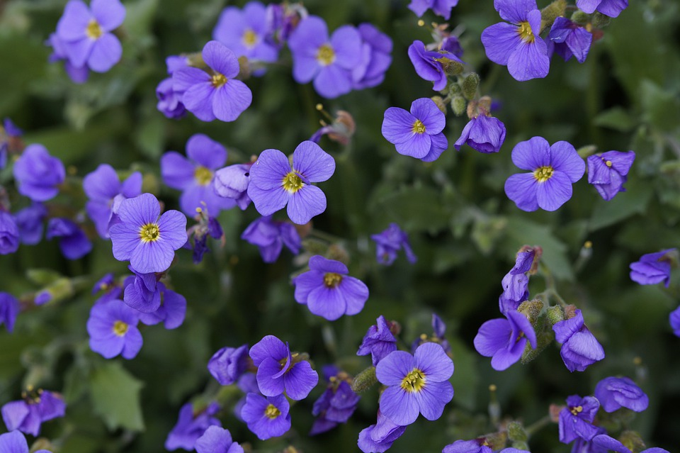 Blue Pillow, Flowers, Purple, Background, Many