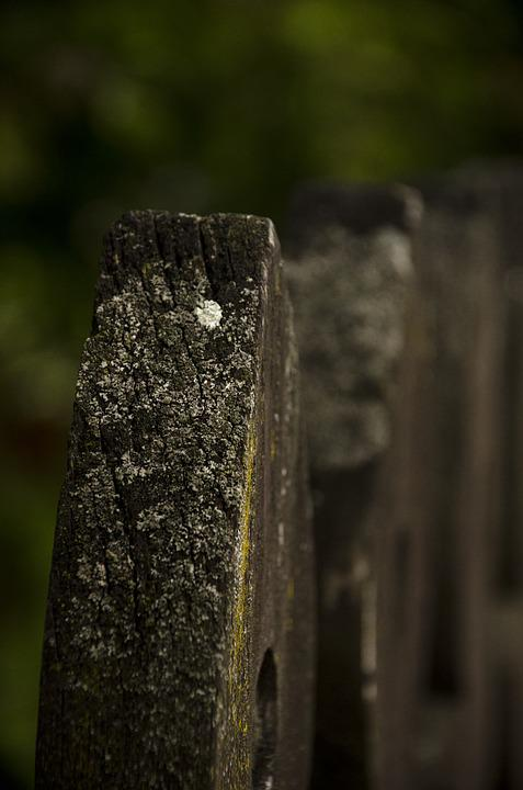 Wood, Material, Textures, Background, Surface, Pattern