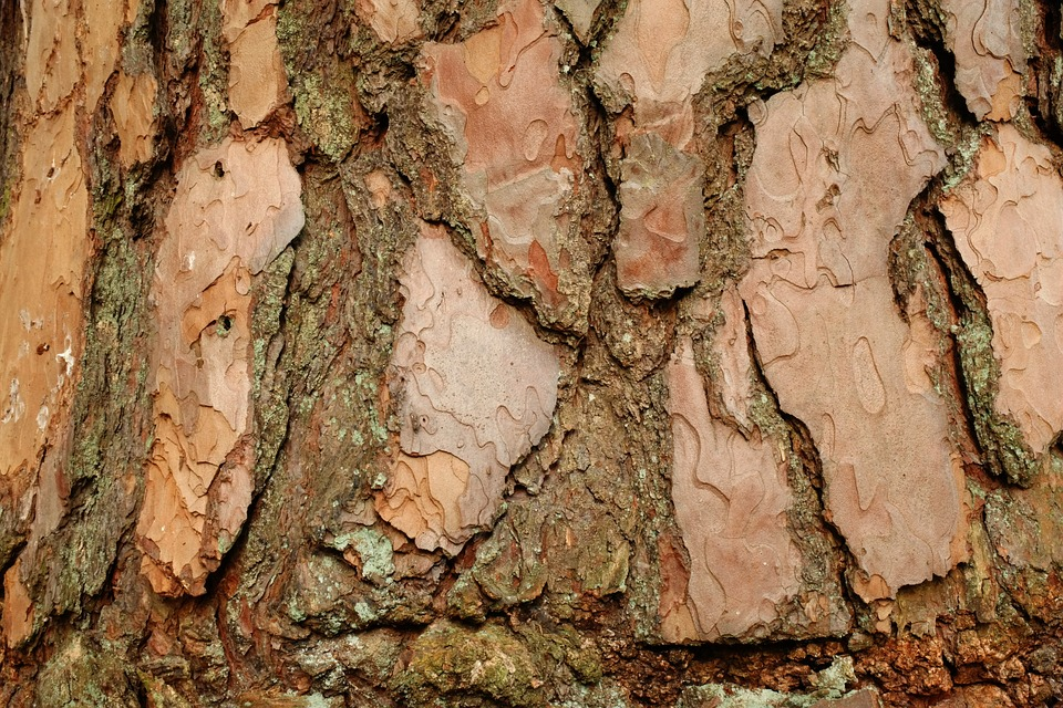 Bark, Pine, Background, Structure, Tree, Shed Bark, Log
