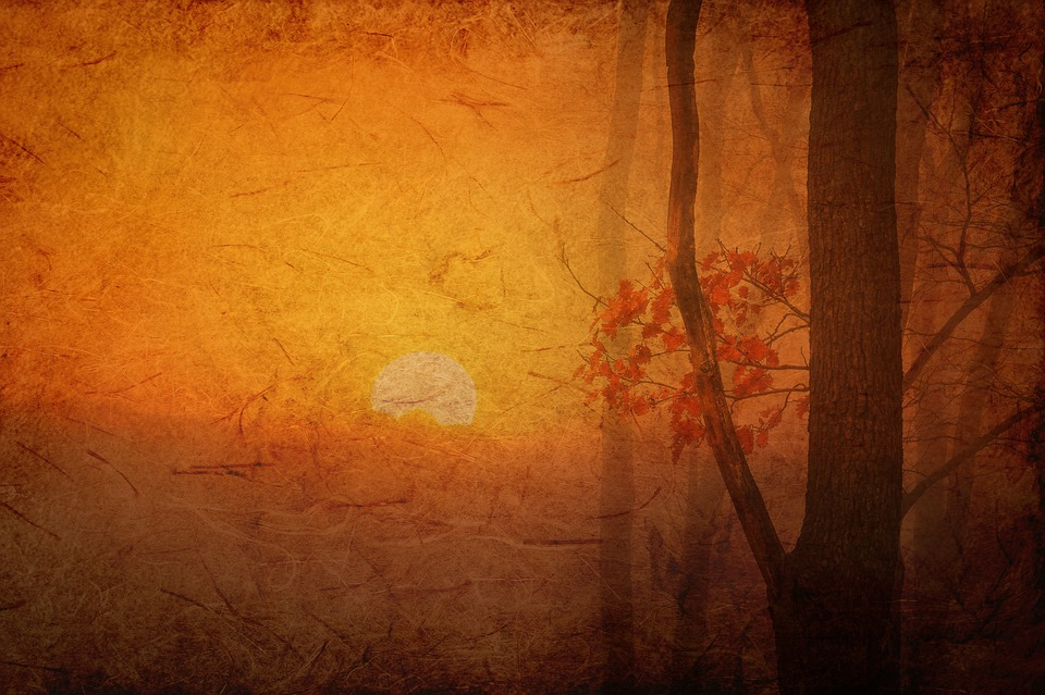 Texture, Background, Paper, Structure, Autumn, Tree