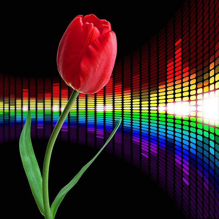 Rosa, Flower, Flowers, Tulip, Background, Flowering