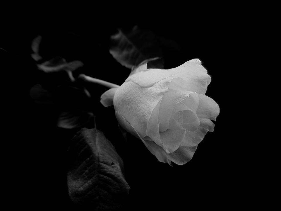 black white rose invitation background images Backgrounds