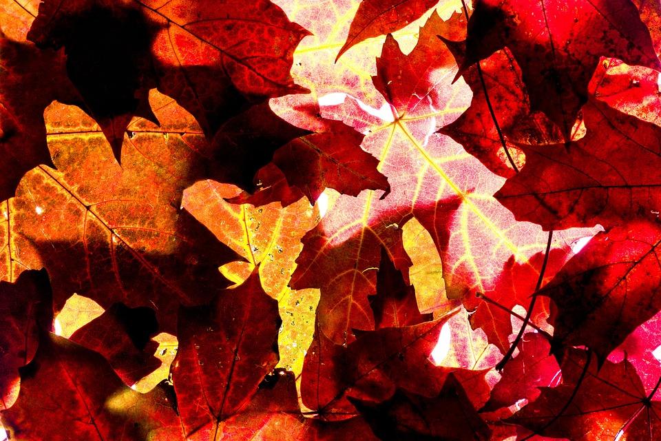 Autumn, Background, Leaves, Red, Yellow, Orange, Light