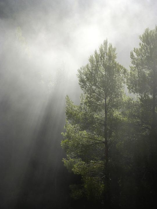 Forest, Fog, Ray Of Sunshine, Chiaroscuro, Backlight