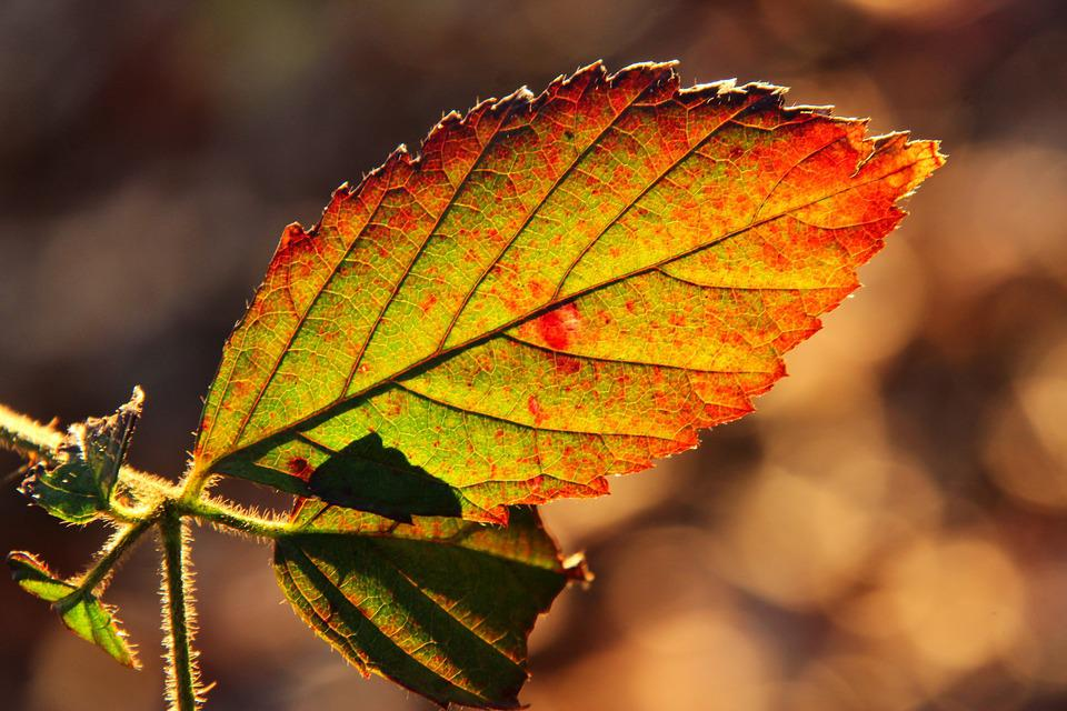 Leaves, Backlighting, Autumn, Forest, Fall Foliage