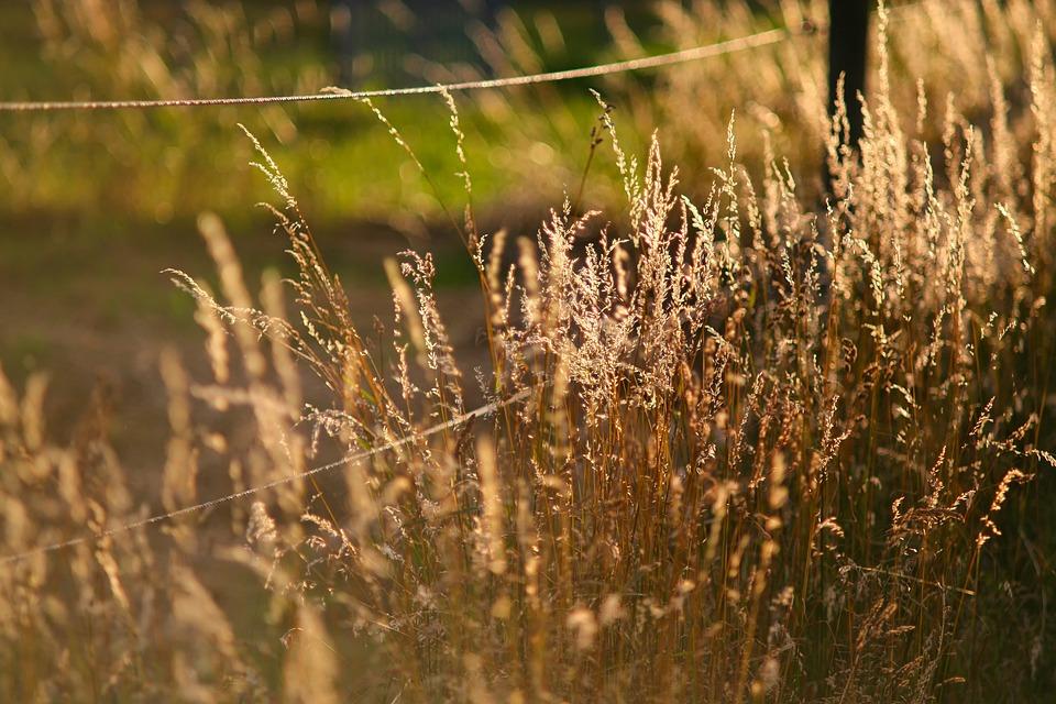 Nature, Landscape, Grass, Backlighting, Mood, Sunshine