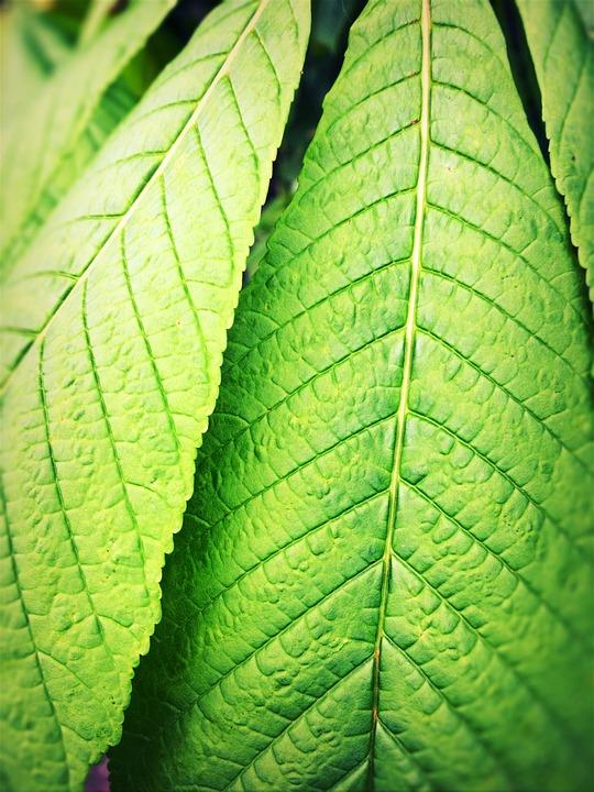 Leaves, Green, Backwards