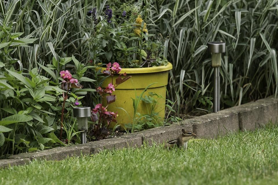 Chipmunk, Critter, Backyard