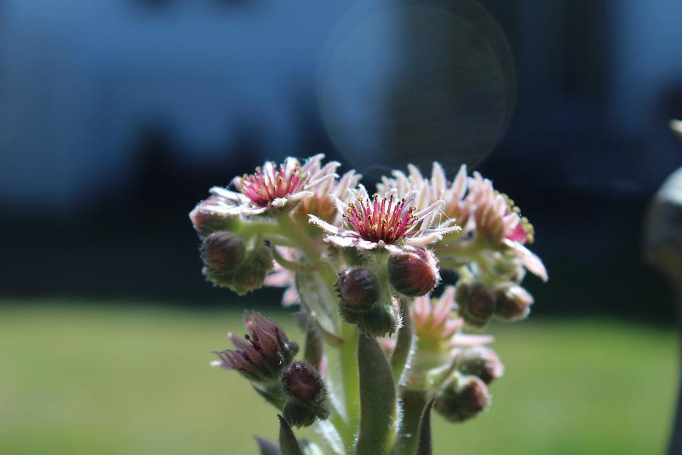 Cactus, Flower, Plant, Backyard, Garden, Cactus Flower