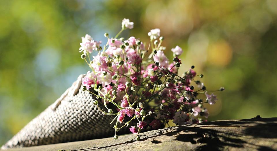 Bag Gypsofilia Seeds, Gypsophila, Bag