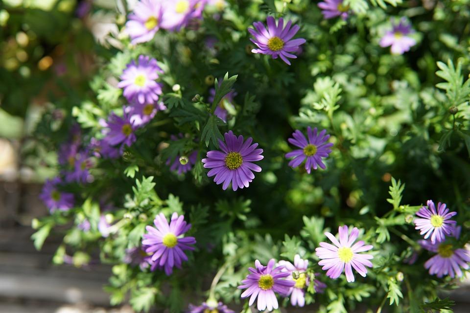 Flower, Balcony, Flowering