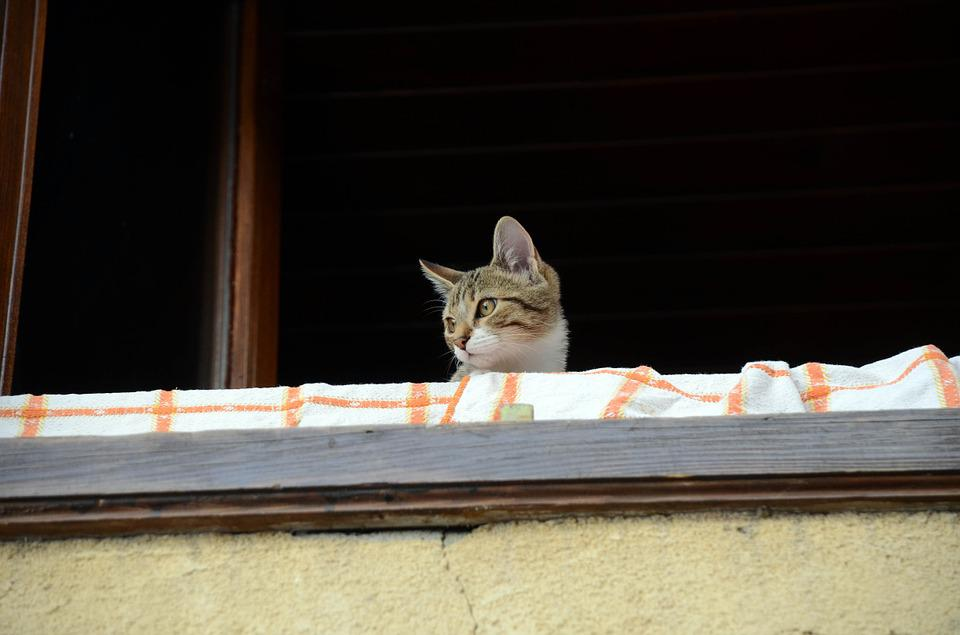 Cat, People, Balcony