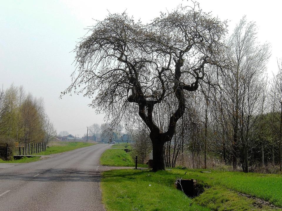 Nature, Landscape, Branches, Bald, Winter, Tree