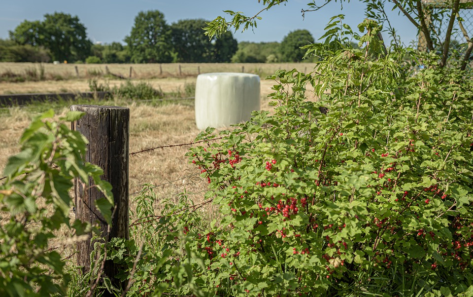 Pasture, Silage, Currants, Pasture Fence, Bale