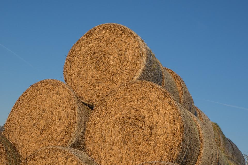 Straw, Stroballen, Round Bales, Agriculture, Bale