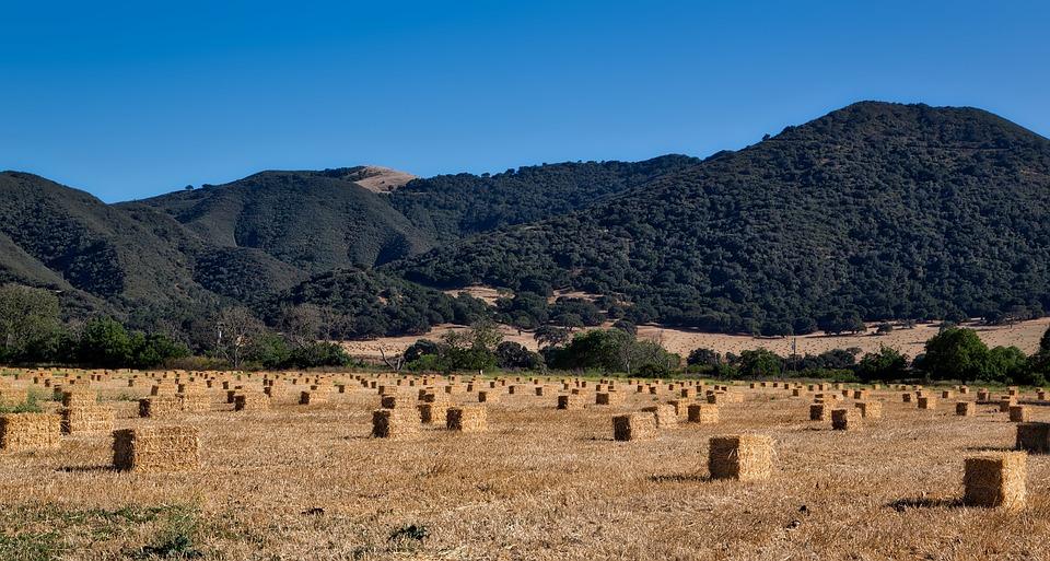 Farm, Hay Field, Bales, Field, Meadow, Valley