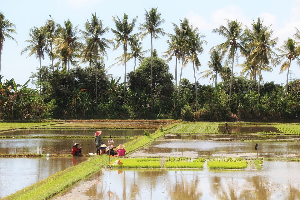 Free photo Bali Indonesia Landscape Rice Field Painting