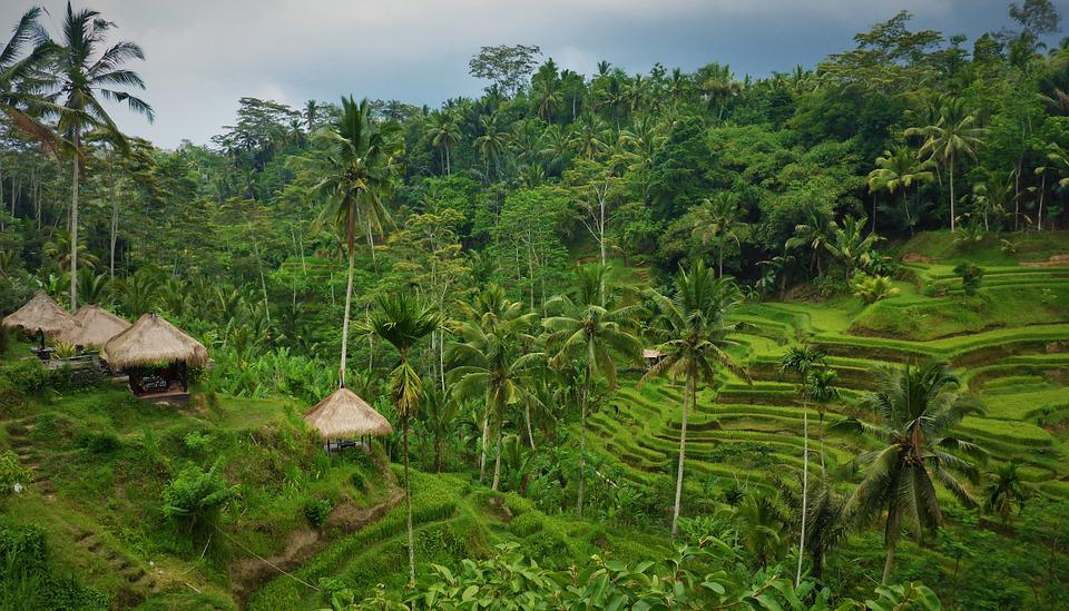 Idonesien, Bali, Paddy, Green, Rice Cultivation