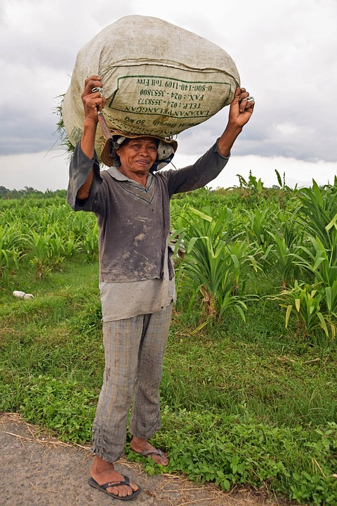 Bali, Indonesia, Travel, Rice Fields, Agriculture