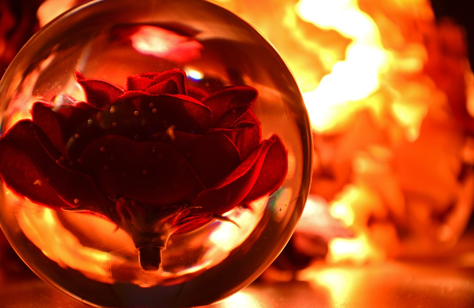 Glass Ball, Ball, Rose, Lights, Reflections, Mirroring
