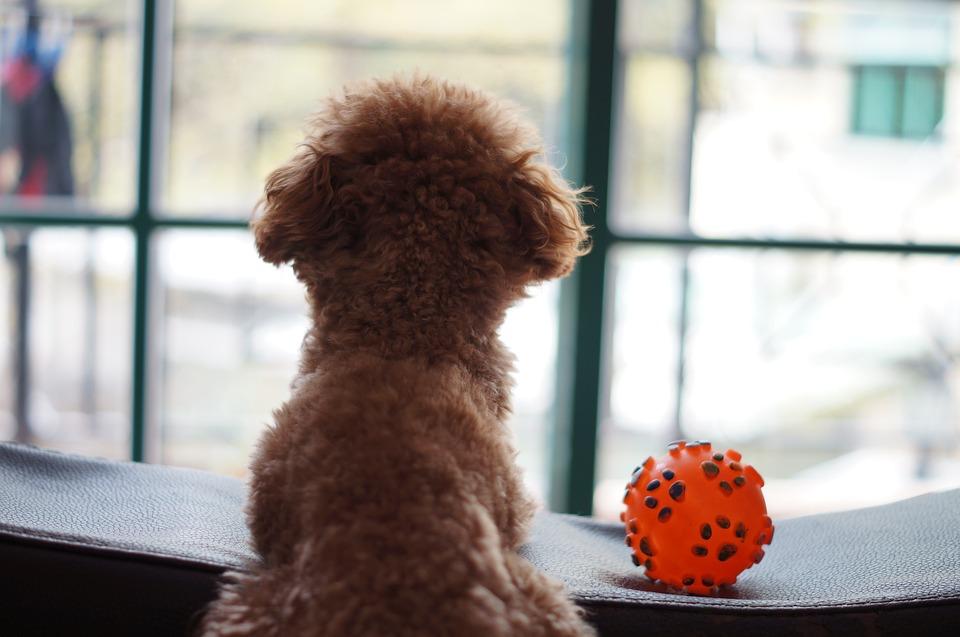 Orange, Ball, Dog, Window