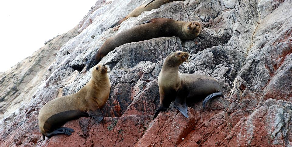 Ballestas Islands, Paracas, National Reserve