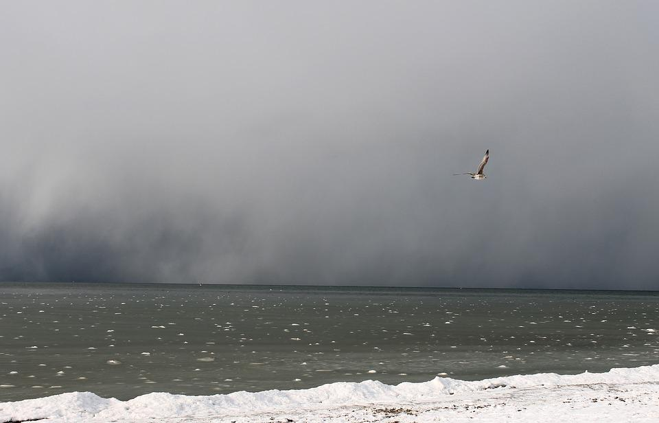 Storm On The Sea, Baltic Sea, Bad Weather, Gull, Winter