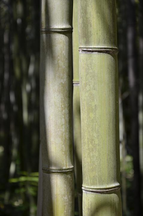 Bamboo, Green, Nature, Vegetation, Plant, Garden