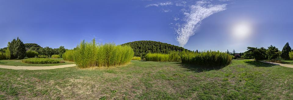 Park, Landscape, Bamboo, Panorama