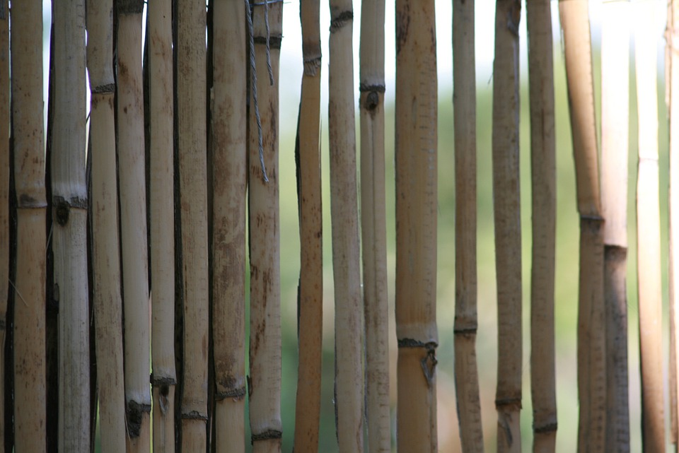 Bamboo, Yellow Bamboo, Halme, Fence, Bamboo Greenhouse