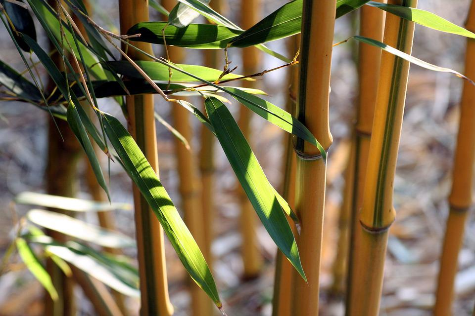 Bamboo, Leaves, Nature, Wood, Green, Zen, Asia, Texture