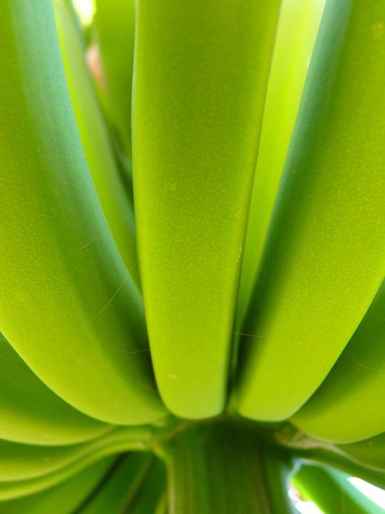Banana, Banana Shrub, Green, Plant, Food