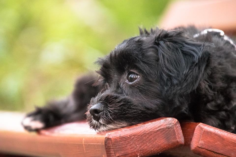 Free Photo Bank Concerns Good Pet Puppy Dog Animal Cute Max Pixel