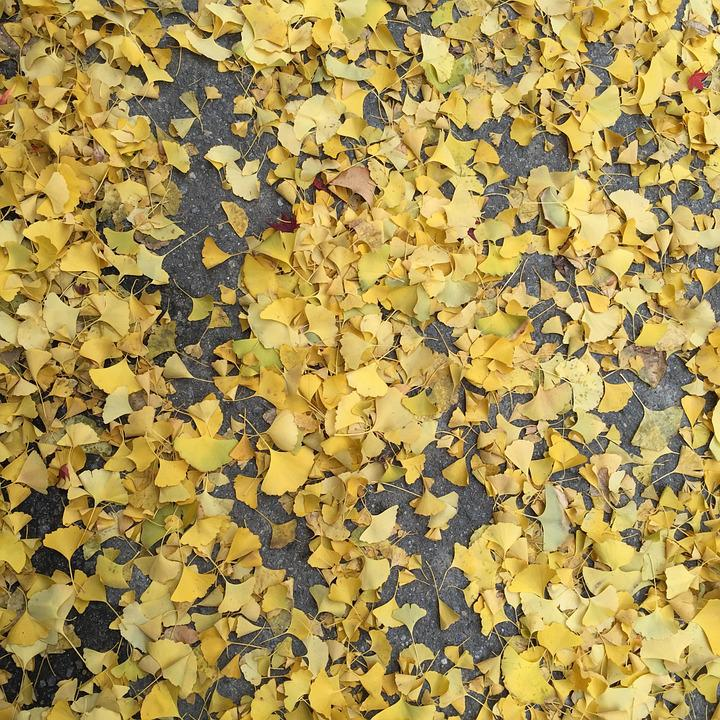 Autumn, Bank Leaves, Bank, Floor